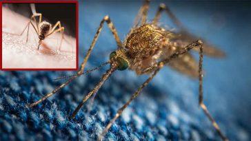 Moustiques : 4 astuces qui marchent pour ne pas se faire piquer la nuit